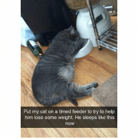 Funny, Ted, and Help: Put my cat on a timed feeder to try to help  him lose some weight. He sleeps like this  now I relate to this cat (@hilarious.ted)