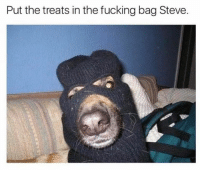 Fucking, Memes, and 🤖: Put the treats in the fucking bag Steve. Just please don't bork at me