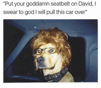 """Funny, God, and Fuck: """"Put your goddamn seatbelt on David, l  swear to god l will pull this car over"""" For fuck sake David @doglimited"""