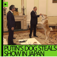 Putin's 'no-nonsense' dog causes commotion during an interview with Japanese media in Moscow! DETAILS: http://on.rt.com/7xmi: PUTIN'S DOG STEALS  SHOW IN JAPAN Putin's 'no-nonsense' dog causes commotion during an interview with Japanese media in Moscow! DETAILS: http://on.rt.com/7xmi