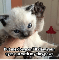 Memes, 🤖, and Ord: Putmedown orD  Putmedownor lIclawyour  eyes  outwith mytiny paws Rawr :3