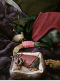 Crying, Fuck, and Today: Putting my dog down today. Girlfriend and I spent the last few days crying, giving him endless treats, and making a little sculpture of him. Fuck everything.