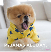 Repost @primark ・・・ We call that a winner of a Sunday tbh 🙌 @jiffpom Primark jiffpom: PYJAMAS ALL DAY.  PRI MARK Repost @primark ・・・ We call that a winner of a Sunday tbh 🙌 @jiffpom Primark jiffpom