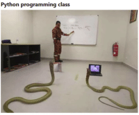i guess i walked into the wrong class: Python programming class i guess i walked into the wrong class