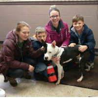 Aww, Juice, and Memes: Q His day is here...Juice has left the building!!! ADOPTED!!!!  Omg...thank you thank you family...we will miss this guy and wish him all the luck! We are so happy for him!! Aww...kids to play with too...so happy for him! Please keep us updated!!