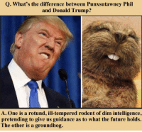 Trump: Q. What's the difference between Punxsutawney Phil  and Donald Trump?  A. One is a rotund, ill-tempered rodent of dim intelligence,  pretending to give us guidance as to what the future holds.  The other is a groundhog.