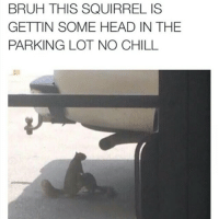 The thirst is real 3hunna smh ratchetmemes ratchet memes meme funny: BRUH THIS SQUIRREL IS  GETTIN SOME HEAD IN THE  PARKING LOT NO CHILL The thirst is real 3hunna smh ratchetmemes ratchet memes meme funny
