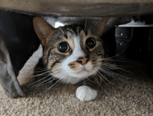 Qtip hiding under the bed: Qtip hiding under the bed