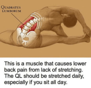 Stretchity stretch: QUADRATUs  LUMBORUM  This is a muscle that causes lower  back pain from lack of stretching.  The QL should be stretched daily,  especially if you sit all day. Stretchity stretch