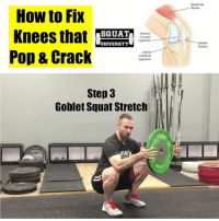 Do your knees sound like popcorn in the microwave when you squat?! (Find out why today!)👇🏼 . This cracking' noise is often caused by stiffness in our body. Try this simple progression & see if it helps👇🏼 . 1️⃣foam roll the quads for 2 minutes (searching out stiff spots in the muscle). You want to be a mean massage therapist to yourself so don't stray away from spots that hurt a bit! This will help improve your soft tissue pliability without any decreases in performance✅ 2️⃣lightly stretch the quads. The couch stretch is a great way to do this. A 30 second stretch will decrease stiffness in the muscles without a decrease in power production for your workout✅ 3️⃣mobilize into a position you'll then be using in your workout. I love the goblet squat stretch. Take a kettle bell or a plate & sit into a deep squat (shoes off or flat sole shoe is preferred). Hold this for 30 seconds to 2 minutes. Then re-rest your squat and see how it feels🏋🏽 . If your 'cracking' continues, is accompanied with pain, I recommend getting screened by a sports physical therapist as this may be an issue that requires a more individual approach to fixing . Full video linked in my bio! _________________________________ Squat SquatUniversity Powerlifting weightlifting crossfit training wod workout gym fit fitfam fitness fitspo oly olympicweightlifting hookgrip nike adidas lift Crossfitter frontsquat squats: Quadricep  - Tendon  How to Fix  Knees that ETAT  Pop & Crack  SQUAT  Cruciate  UNIVERSITY  Patellar  Tendon  Lateral  Collateral  Step 3  Goblet Squat Stretclh  GH Do your knees sound like popcorn in the microwave when you squat?! (Find out why today!)👇🏼 . This cracking' noise is often caused by stiffness in our body. Try this simple progression & see if it helps👇🏼 . 1️⃣foam roll the quads for 2 minutes (searching out stiff spots in the muscle). You want to be a mean massage therapist to yourself so don't stray away from spots that hurt a bit! This will help improve your soft tissue pliability without any decreases in performance✅ 2️⃣lightly stretch the quads. The couch stretch is a great way to do this. A 30 second stretch will decrease stiffness in the muscles without a decrease in power production for your workout✅ 3️⃣mobilize into a position you'll then be using in your workout. I love the goblet squat stretch. Take a kettle bell or a plate & sit into a deep squat (shoes off or flat sole shoe is preferred). Hold this for 30 seconds to 2 minutes. Then re-rest your squat and see how it feels🏋🏽 . If your 'cracking' continues, is accompanied with pain, I recommend getting screened by a sports physical therapist as this may be an issue that requires a more individual approach to fixing . Full video linked in my bio! _________________________________ Squat SquatUniversity Powerlifting weightlifting crossfit training wod workout gym fit fitfam fitness fitspo oly olympicweightlifting hookgrip nike adidas lift Crossfitter frontsquat squats