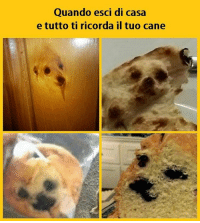 """All around me are familiar faces..."" tmlplanet cane cani animali casa pensieri ricordi: Quando esci di casa  e tutto ti ricorda il tuo cane ""All around me are familiar faces..."" tmlplanet cane cani animali casa pensieri ricordi"