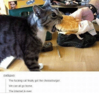 Fucking, Internet, and Home: Qubne  mellopwn  The fucking cat finally got the cheeseburger  We can all go home  The internet is over