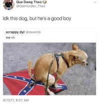 Blackpeopletwitter, Good, and Scrappy: Que Dawg Theo  @DatHurdler_Theo  ldk this dog, but he's a good boy  scrappy dyl @daverds  me rn  8/13/17, 8:57 AM <p>This dog is going places (via /r/BlackPeopleTwitter)</p>