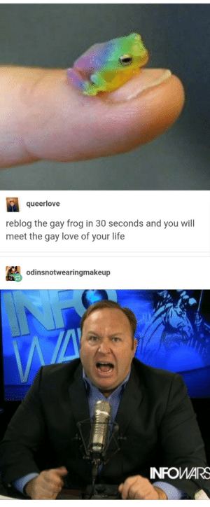 the water is being poisoned with chemicals that are making the friggin' frogs gay!!!: queerlove  reblog the gay frog in 30 seconds and you will  meet the gay love of your life  odinsnotwearingmakeup  INFOWARS the water is being poisoned with chemicals that are making the friggin' frogs gay!!!