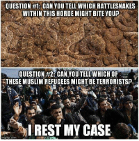 As Always WOLF PACK... Stay Safe.....Remain Vigilant ! Goodnight and God Bless  !                              War Eagle: QUESTION #1: CAN YOU TELL WHICH RATTLESNAKES  WITHIN THIS HORDE MIGHT BITE YOUP  QUESTION #2 CAN YOUTELL WHICH OF  THESE MUSLIMREFUGEES MIGHT BETERRORISTSP,  I REST MY CASE  rngt As Always WOLF PACK... Stay Safe.....Remain Vigilant ! Goodnight and God Bless  !                              War Eagle