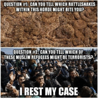Memes, 🤖, and Rattlesnake: QUESTION #1: CAN YOUTELLWHICH RATTLESNAKES  WITHIN THIS HORDE MIGHT BITE YOUP  QUESTION #2 CAN YOUTELL WHICHOF  THESE MUSLIMREFUGEESMIGHT BETERRORISTSP,  I REST MY CASE  mgt