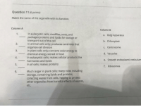 Energy, Food, and Smooth: Question 11 (6 points)  Match the name of the organelle with its function.  Column A  Column B  1.  In eukaryotic cells; modifies, sorts, and  -packages proteins and lipids for storage or  2.  3.  4.  5.  transport out of the cell  In animal cells only; produces centrioles that  organize cell division  In plant cells only; converts solar energy to  chemical energy stored in food  In eukaryotic cells; makes cellular products like  a. Golgi Apparatus  b. Chloroplast  c. Centrosome  d. Vacuoles  e. Smooth endoplasmic reticulum  f. Ribosomes  hormones and lipids  In all cells; makes proteins  6.  Much larger in plant cells; many roles including  storage, containing lipids and proteins,  collecting waste from cells, helping to protect  other organelles from harmful effects of wastes,  etc.