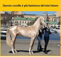 Memes, Horse, and 🤖: Questo cavallo e piu luminoso del mio futuro Shine bright like a horse. tmlplanet futuro vita cavallo brillante animali ragazzi