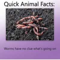 Facts, Animal, and Worms: Quick Animal Facts:  Worms have no clue what's going on
