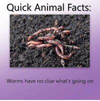 Facts, Animal, and Dank Memes: Quick Animal Facts:  Worms have no clue what's going on Facts