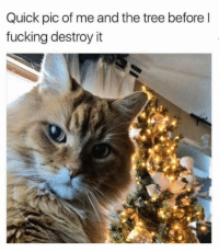 Dank, Fucking, and Lol: Quick pic of me and the tree before l  fucking destroy it lol