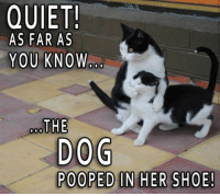 Dog Talk Share 11-3-16 We won't tell 🤐 lol ~Robin: QUIET!  AS FAR AS  YOU KNOW  THE  DOG  POOPED IN HER SHOE! Dog Talk Share 11-3-16 We won't tell 🤐 lol ~Robin