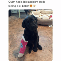 Funny, Quinn, and Overload: Quinn had a little accident but is  feeling a lot better Cuteness overload