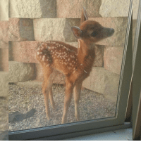 """Bambi, Dank, and Quite: """"Quite possibly the most Bambi looking fawn I've ever seen..."""""""