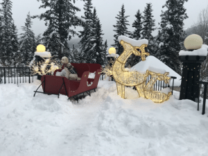 Quite the ride with the reindeers at Calgary, Canada: Quite the ride with the reindeers at Calgary, Canada