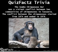 """Target, Tumblr, and Blog: QunzFactz Trivia  The Gombe Chimpanzee War  was a violent conflict between two  communities of chimpanzees in Tanzania.  The conflict between the chimpanzees started  from 1974 and ended in 1978.  UIZHacTZ.tunblr.com  Photo Credit: Thomas Lersch <p><a class=""""tumblr_blog"""" href=""""http://quizfactz.tumblr.com/post/96640601746/source-through-a-window-my-thirty-years-with-the"""" target=""""_blank"""">quizfactz</a>:</p> <blockquote> <p>Source:<em>Through a Window: My Thirty Years with the Chimpanzees of Gombe</em> by J. Goodall</p> </blockquote>"""