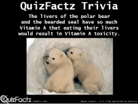 "Target, Tumblr, and Bear: QunzFactz Trivia  The ivers of the polar bear  and the bearded seal have so much  Vitamin A that eating their livers  would result in Vitamin A toxicity.  UIZFacTZ tumblr com  Photo Credit: U.S. Fish and Wildlife Service <p><a class=""tumblr_blog"" href=""http://quizfactz.tumblr.com/post/94928961301/source-the-biochemical-journal-37-2-166-168"" target=""_blank"">quizfactz</a>:</p> <blockquote> <p>Source: <em>T</em><em>he Biochemical Journal</em><span> </span><strong>37</strong><span> (2): 166–168.</span></p> </blockquote>"
