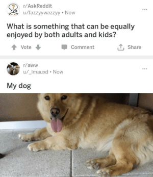 Aww, Tumblr, and Blog: r/AskReddit  u/fazzyywazzyy Now  What is something that can be equally  enjoyed by both adults and kids?  Comment  Share  Vote  r/aww  u/_Imauxd Now  My dog awesomacious:  I fully agree.