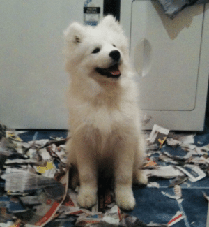 r/aww ALL the cuteness, none of the clean up! Baby things be messy.: r/aww ALL the cuteness, none of the clean up! Baby things be messy.