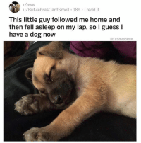 "Aww, Bless Up, and Emoji: r/aww  u/ButZebrasCantSmell 18h i.redd.it  This little guy followed me home and  then fell asleep on my lap, so l guess I  have a dog now  @DrSmashlove See bruv it's two reactions u get from ladies when u laying pipe for the first time and bust a lil early. Type 1: she hear u moan and groan and let loose the juice and she just do this grin: 😌. Like ""it's ok baby I understand 😌 this Nani feels like silk soaked in honey and coated in mango juice 😌 I don't expect u to last more than a few strokes 😌 it's the price of having A1 Nani 😌."" Like that's literally what this emoji was based off of - it's the ""it's ok my adorable Minute Man 😌"" emoji 😂. Now then, Type 2: she ain't playing bruv. Type 2 came here for some proper pipe and yo early arrival mean u just deprived her of the value of her investment. She ain't having it. U let out half a moan - not even a full moan and groan - just literally ""AHP-"" and her eyes turn red. Her face morph into the face of a she-devil 👹. Horns emerge straight on her head top. And she always say the same thing: ""NOT...YET!!!! 👿"" and then she hit u with the Type 2 leg lock Bruv. She wrap her arms and legs around u like: ""YOU MINUTE MAN LOOKIN A$$ I'M NOT GON LET U PULL OUT IMMA HAVE YO BABY TO TEACH U A LESSON ABOUT BUSTING EARLY U THOUGHT SH!T WAS SWEET WELL LEMME TELL U HOW SWEET: EVERY TIME U LOOK IN THE FACE OF THIS BABY U GON REMEMBER THE TIME U THOUGHT IT WAS OK TO BUST AFTER A FEW STROKES - HELL NAW - NOW GIMME THIS WORK AND LET ME NAME THIS BABY WITHOUT CONSULTING U. ""Zeena"". ISSA GREEK NAME THAT MEANS ""stranger, guest"" WHICH IS APPROPRIATE BECAUSE IMMA HAVE FULL CUSTODY AND U GON SHOW UP WITH MY MONTHLY SUPPORT AS A GUEST IN A CRIB *YOU* PAYING FOR HOWBOWDAH 👿."" And u thinking ""naw baby relax it's all good round 2 gon be amazing 😬"" and she just like ""sorry I had other plans after this, expect to get served with a DNA test in 9 months bless up."" Type 2 ladies imma need y'all to learn from yo Type 1 sisters. Embrace the fact that your Nani A1. Give him another chance. U ain't gotta go off and have his baby to teach him a lesson - let him cool his jets and give u the bidness one mo 'gain. And if he bust early, cut him off forever. AND THEN DM ME IMMEEJALLY BECAUSE IT MEAN U GOT THAT UNICORN NANI AND WE SHOULD GET MARRIED AND HAVE CHIRREN BLESS UP 🤗😂😂😂"