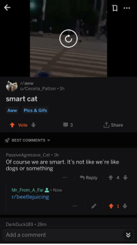 Aww, Dogs, and Best: r/aww  u/Cecelia Patton 1h  smart cat  Aww  Pics & Gifs  Vote  3  1, share  BEST COMMENTS ▼  PassiveAgressive_Cat . 1h  Of course we are smart. It's not like we're like  dogs or something  Reply 會4  Mr-From A-Far요 . Now  r/beetlejuicing  DarkDuck189 28m  Add a comment