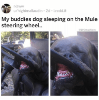 "Aww, Bad, and Be Like: r/aww  u/highimallaudin 2d i.redd.it  My buddies  steering wheel  dog sleeping on the Mule  @DrSmashlove So I started watching this show Ozarks on the stairmaster and in the first episode we learn that the wife, an olderish white woman, is having an affair. What's the nickname she calls her side piece? ""Sugarwood."" BRUV 😂. I'm done. I'm physically, mentally, emotionally done. ""Daddy"" is over. It's cancelled. From now on u if u deal with me u gotta call me ""Honeysuckle PP"". U feel me? Imma need more effort put into it. These older ladies making y'all look bad. Don't be calling yo man ""daddy"" and then u grab his phone and find out some cougar calling him ""Agave Papi"" u gon have to re-evaluate yo whole life u thought shit was sweet now u found out Susan who is twice-divorced and live six floors above u giving yo man lovey dovey names and shit. ""Mango Mamba"". U feel me? Susan gon be saucy about it too. She gon see u in the mailroom like ""Hi Beth! Where was Steven last night?"" And U gon be like ""ummmm...CrossFit, then he came home to me, why?"" And Susan gon eye u up and giggle like ""no sweetie Steven was in my apartment bending me over my Restoration Hardeare sectional. FYI. And btw my man loves it when I call him Mango Mamba. Sorry hehe. OUR man. Toodles 🤗. Cmon Charlie..."" and Charlie the poodle gon just look at u and grin like ""she ain't lyin, I seent the whole thing - please don't make me answer for Susan, she crazy - but low key u coulda gave yo man a cuter nickname JUST SAYIN. ARF...HEH HEH!!"" YOUNG LADIES, THESE OLDER WOMEN COMING FOR U. YALL GON HAVE TO BE MORE POETIC. STEP UP YO NICKNAME GAME IMMEEJALLY. IMMA LEAVE YALL WITH THAT. Y'all been warned 🤗. BLESS UP 😂😂😂"