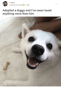 <p>found this doggo on r/aww but it deserves to be here too</p>: r/aww  u/kennnnnard 15h  Adopted a doggo and l've never loved  anything more than him <p>found this doggo on r/aww but it deserves to be here too</p>