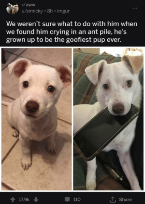 Aww, Crying, and Saw: r/aww  u/simicky. 8h. imgur  We weren't sure what to do with him when  we found him crying in an ant pile, he's  grown up to be the goofiest pup ever.  T Share  1 17.9k  110 They saw him crying and took care of him, now he is a happy pup!