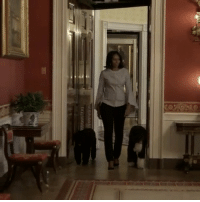 "Repost @michelleobama: ""Taking it in on one last walk through the People's House. 🙋🏽🐶🇺🇸"" MichelleObama WSHH: R  C  112111111 Repost @michelleobama: ""Taking it in on one last walk through the People's House. 🙋🏽🐶🇺🇸"" MichelleObama WSHH"