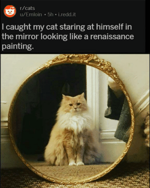 Cats, Mirror, and Cat: r/cats  u/Emloin 5h i.redd.it  I caught my cat staring at himself in  the mirror looking like a renaissance  painting.