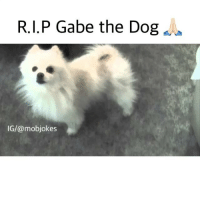 Internet sensation Gabe the Dog has passed away the morning of January 19, rest In peace old friend 😔🙏🏻 you gave us a lot of laughs and giggles: R.I.P Gabe the Dog  IG/@mobjokes Internet sensation Gabe the Dog has passed away the morning of January 19, rest In peace old friend 😔🙏🏻 you gave us a lot of laughs and giggles