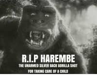 RIP HAREMBE: R.I.P HAREMBE  THE UNARMED SILVER BACK GORILLA SHOT  FOR TAKING CARE OF A CHILD RIP HAREMBE