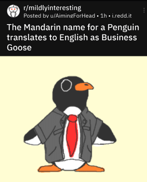 blessedimagesblog:  Blessed_goose: r/mildlyinteresting  Posted bv u/AimingForHead • 1h • i.redd.it  The Mandarin name for a Penguin  translates to English as Business  Goose blessedimagesblog:  Blessed_goose