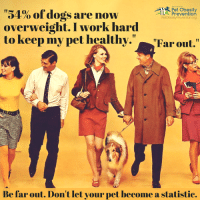 """R Pet obesity  """"54% of dogs are now  Prevention  PetObesityPreventionOrg  overweight. I work hard  to keep my pet healthy."""" Far out.""""  Be far out. Don't let your pet become a statistic. Don't let your dog become a statistic... ;-)   Read the full survey here: http://petobesityprevention.org/2016-u-s-pet-obesity-statistics/"""