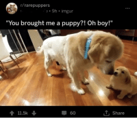 """Rarepuppers: r/rarepuppers  9h imgur  """"You brought me a puppy?! Oh boy!""""  11.5k  60  Ly Share"""