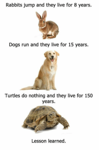 """Dogs, Memes, and Run: Rabbits jump and they live for 8 years.  Dogs run and they live for 15 years.  Turtles do nothing and they live for 150  years.  Lesson learned. <p>Meirl via /r/memes <a href=""""http://ift.tt/2pRwmhG"""">http://ift.tt/2pRwmhG</a></p>"""