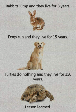 Live For: Rabbits jump and they live for 8 years.  Dogs run and they live for 15 years.  Turtles do nothing and they live for 150  years.  Lesson learned.
