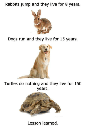 Live For: Rabbits jump and they live for 8 years.  Dogs run and they live for 15 years  Turtles do nothing and they live for 150  years.  Lesson learned.