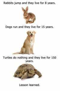 LIKE SHARE TAG: Rabbits jump and they live for 8 years.  Dogs run and they live for 15 years.  Turtles do nothing and they live for 150  years.  Lesson learned LIKE SHARE TAG