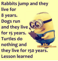 dog run: Rabbits jump and they  live for  8 years.  Dogs run  Ge  and they live  for 15 years.  Turtles do  nothing and  they live for 150 years.  Lesson learned